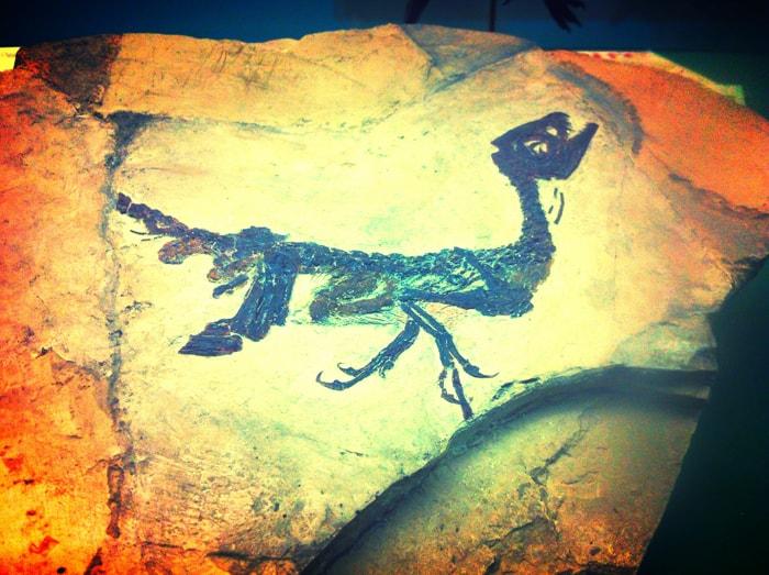 ciro-baby-dinosauro_bambini-milano